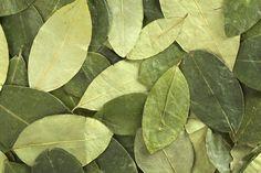 Propiedades de la planta de coca