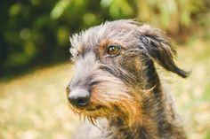 #photographie #photography #animal #dog #chien #teckel #nature #details #vintage #manon #debeurme #photographe #photographer Manon, Goats, Nature, Vintage, Dachshund Dog, Photography, Animaux, Naturaleza, Vintage Comics