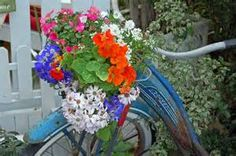 Spring Flower Container Ideas - Bing Images
