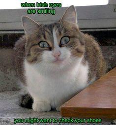 Beware The Cat's St. Pat's Day Pranks