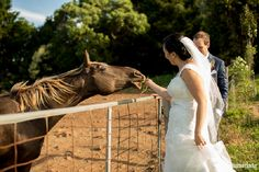 Fiona Matt's Wedding – Kiama Anglican Church, Saddleback Mountain and The Pavilion Anglican Church, Mountain Photos, Tea Ceremony, Pavilion, One Shoulder Wedding Dress, Reception, Horses, Wedding Dresses, Photography