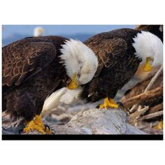 EAGLEs -- A Moment of Silence for Our Fallen _____________________________ Reposted by Dr. Veronica Lee, DNP (Depew/Buffalo, NY, US)