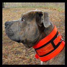 hog hunting dogs - Google Search