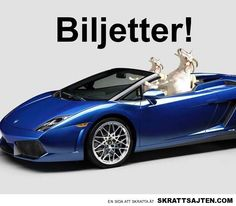 Biljetter Puns Jokes, Dad Jokes, Weird Pictures, Funny Moments, The Funny, I Laughed, Laughter, Haha, Funny Quotes
