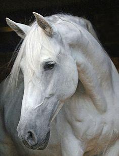 disagio del cavallo twitter page