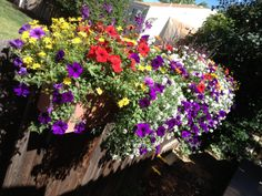 Window Boxes Stuffed with Pretties...Thank you Chuck!