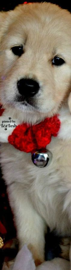 ❇Téa Tosh❇ Put your bells on!