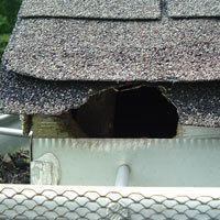 Call at 678-601-6041 to get the immediate inspection of the home, if it is infected from the rats. For more information: https://bit.ly/2Bj7Ajp #RatControlAtlanta