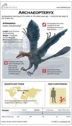 Archaeopteryx was an evolutionary link between dinosaurs and birds. Scientists long thought Archaeopteryx was the first bird, but recent discoveries have made them rethink that status.