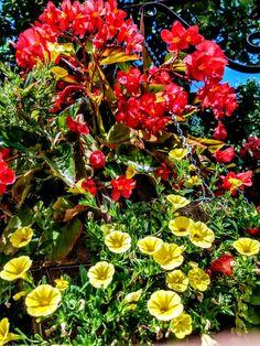 #red #yellow #green #flowers  #WiljoelArt