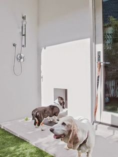Outdoor shower dog shower dog and garden outside dog wash station solutioingenieria Images