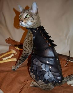 http://cdn4.fashionablygeek.com/wp-content/uploads/2014/01/cat-armor-1.jpg more cat armor ... just what the world needs! LOL!
