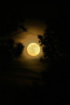 Golden Super Moon ~ Gulf Shores, Alabama