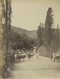 Acceso (entrada) a Caracas, 1880