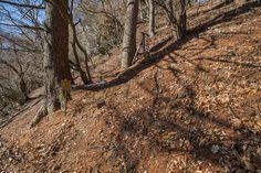【独鈷山 宮沢コース】登山百景-沢山湖コースと合流