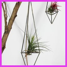 Freestanding Hanging Planters Geometric Himmeli Swing Wrought Iron Tillandsia Air Plants Holder Triangular Shaped Metal Rack
