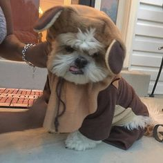 The dreaded Ewok costume.... #fbf #flashbackfriday #flashback #dog #dogs #dogsofinstagram #dogstagram #dogslife #doglover #dog_features #pet #pets #petstagram #petsofinstagram #pets_of_instagram #petscorner #shihtzu #shihtzusofinstagram #shihtzulovers #shihtzunation #shihtzulove #shihtzugram #shihtzucorner #weeklyfluff #igpets #igdaily #cutedogs #fluff  by cody_chronicles  http://bit.ly/teacupdogshq