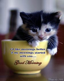 Love greetings, creative arts, Emotional greetings: Awesome good morning wallpaper ! Good morning scraps ! Good morning sms ! Good morning images ! Heart touching good morning cat wallpaper ! Heart touching good morning images with quotes ! Heart touching lines ! Awesome good morning cat images