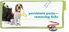 Learn how to safely remove ticks - and avoid the diseases they carry - with this pet health tip from Petplan pet insurance.