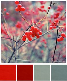 Holiday color inspiration