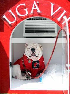UGA in the Dawg House on Ice