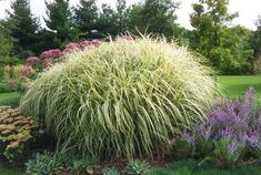 Ornamental grasses grow almost anywhere and, with a little bit of maintenance, come up year after year. Supplied What is ornamental grass? When we think of grass we envision a well-manicured lawn right? Well grass, if left to grow. Low Maintenance Garden Design, Ornamental Grasses, Lawn And Garden, Herbs, Exterior, Gardening, Ideas, Garten, Garten