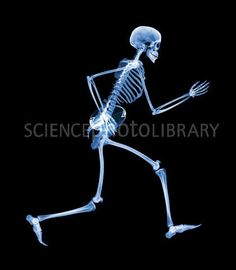 Rugby Skeleton X-Ray