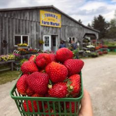 The season's first local strawbs are hitting Oxford County! These southwestern Ontario bad boys were found at Turner's Farm Market in Thamesford, ON! Will Turner, Bad Boys, Ontario, Tourism, Oxford, Seasons, Instagram Posts, Beautiful, Turismo