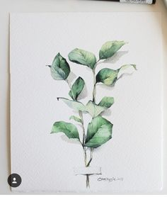 things to sketch Watercolor Plants, Watercolor Leaves, Watercolor Drawing, Watercolor Design, Watercolor Illustration, Painting & Drawing, Art Sketches, Art Drawings, Illustration Inspiration