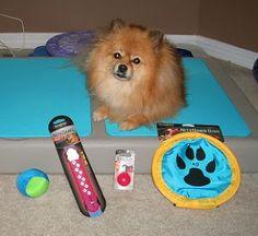 Nite Ize makes pawsome LED dog products!