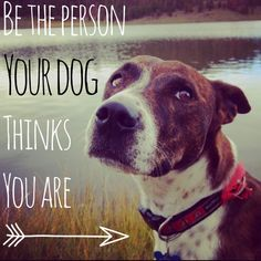 Be the person your dog thinks you are. Dog quote. This is a photo of my sweet dog Bella who is a rescue from the Utah Humane society #uhsrescue #adoptfirst photo by Hillary Sybrowsky text added with Studio