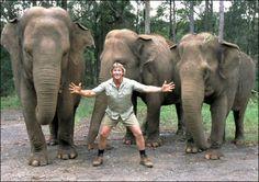 Steve Irwin and elephants