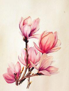 Dui Tang ~ Magnolia (watercolour)