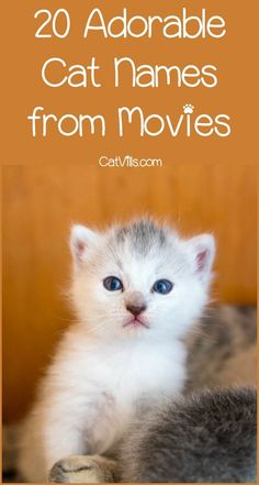 Get ready to be inspired by these sweet cat names from movies! Coming up with the perfect name for your new kitty is never an easy feat. Sure you could go with popular cat names like Muffin or Fluffy but I like to be a little more unique. These movie ca Cute Cat Names Girls, Kitten Names Girl, Kitten Names Unique, Grey Cat Names, Funny Cat Names, Cute Names, Unique Cats, Dog Names, Female Cat Names Unique