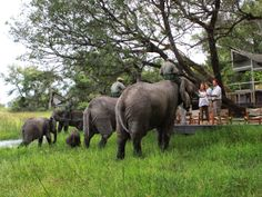 A true highlight of a stay at Abu Camp is interacting with the resident #elephants.  #AbuCamp #Botswana #Safari #SecretAfrica