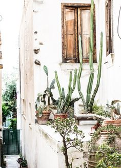 Neutral colors are a decorating staple. Our paint and color experts love the desert sand color schemes we see. Using neutral colors in your home offers a multitude of ways to add personality into your interior design. For color hue ideas go to Domino. Outdoor Spaces, Outdoor Living, Pot Plante, Plants Are Friends, Cactus Y Suculentas, Plantation, Cacti And Succulents, Neutral Colors, Garden Inspiration