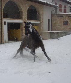 Lotus gioca a casa nella neve :)