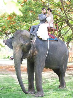 Orchestrate a grand couple exit with an elephant ride to have the extravagance of a destination wedding come full circle. Wedding Day Tips, Bali Wedding, Wedding Cars, Wedding Stuff, Wedding Ideas, Wedding Inspiration, Wedding Themes, Diy Wedding, Wedding Reception