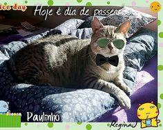 Meu lindo gato Paulinho! 💟 😺