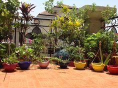 7 Best Tips: Cottage Garden Landscaping Climbing Roses modern garden landscaping drought tolerant. Small Balcony Garden, Garden Pots, Terrace Garden, Garden Ideas India, Indian Garden, Unique Gardens, Diy Garden Decor, Hanging Baskets, Garden Landscaping