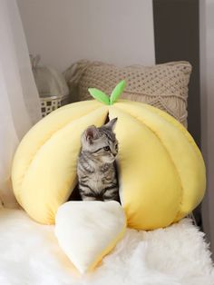 Funny Cats, Funny Animals, Kitten Beds, Cats In Bed, Dog Beds For Small Dogs, Small Cat, Indoor Pets, Animal Room, Cat Room