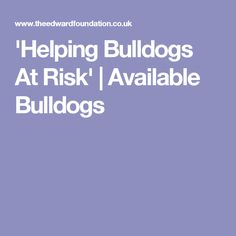 'Helping Bulldogs At Risk' | Available Bulldogs