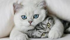 Desvendando mitos sobre gatos