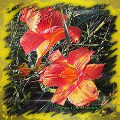 Tanya Lynn Photography  Special Garden Print $125.00