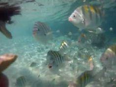 Coki beach St Thomas virgin islands snorkel gopro