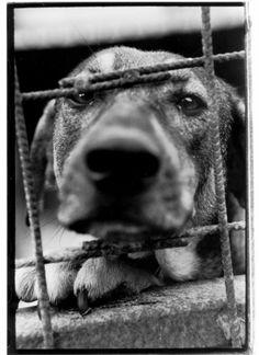 Sos Primo Soccorso Cani e Gatti Sos, Fotografia