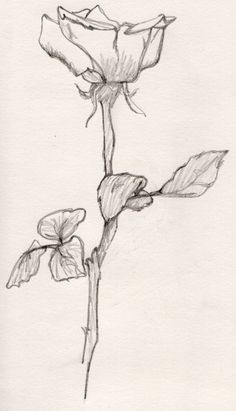 Fast flower sketch . . . #rosesketch #flowersketch #flower #fastsketch #rose #pencilsketching #rosedrawing