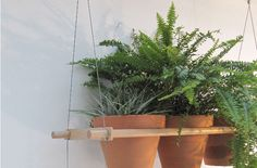 compagnie-hanging-house-plant-shelves-gardenista.png 667×440 pixels