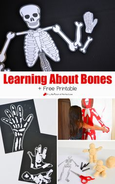 Fun ways to learn about bones and skeletons with kids.