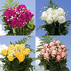 Global Rose Presents ★ Cheapest Your Choice Of Dozen Color Roses With Fillers ★ Absolutely Fresh Guaranteed Cheapest Your Choice Of Dozen Color Roses With Fillers Shipped Free!
